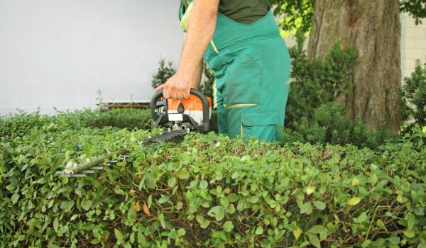 Außenanlagenpflege, Heckenschnitt und Gartengestaltung
